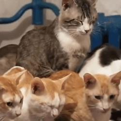 chats abandonnés ukraine