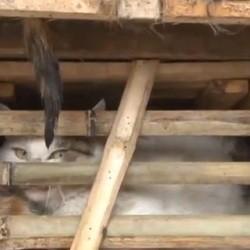chats sauvés au vietnam