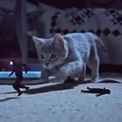 les chats nous protègent contre les voleurs de chaussettes
