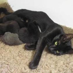 une chatte sauvagement abandonn 233 e m 232 ne sauveteur 224 sa port 233 e de chatons cause animale wamiz