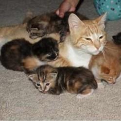 chatte sauve ses chatons