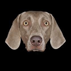 leur chien antoine schneck expo photos