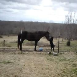 chien et cheval jouent ensemble video