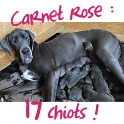 chienne 17 chiots record