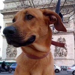 mon chien ma ville, rendre sa place au chien en ville