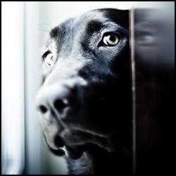 chien errant abandon