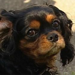 chien abandon enfant lettre