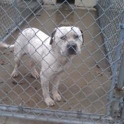 chien abandonné refuge adoption