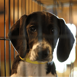 chien abandonné refuge