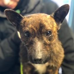 sauvetage d'un chien abandonné par un autre chien