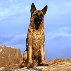 chien abattu police