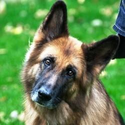 chien d'accompagnement école epilepsie