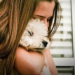 un adolescente fugue pour emmener son chien chez le vétérinaire