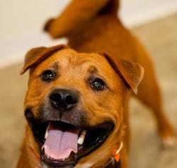 Bien préparer l'arrivée d'un chien à la maison - Choisir