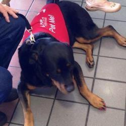 des chiens pour apaiser les voyageurs à l'aéroport