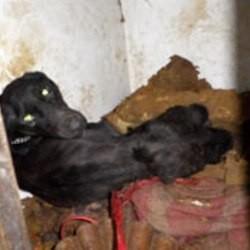 chien maltraité affamé sauvé sauvetage