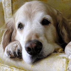 arthrose canine ostéopathie