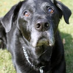 prolonger la durée de vie de son chien