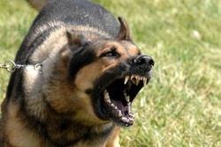 chien agressif mordeur