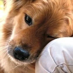 chien qui aime trop dépendance affective