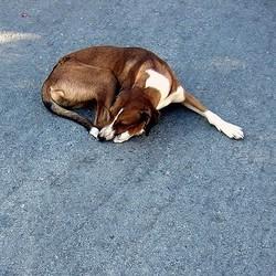 un chien jeté sur la route