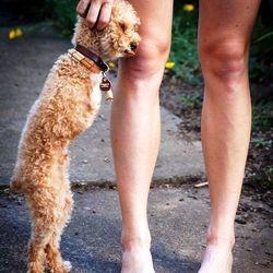 chien handicap amputation pattes avant