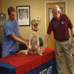 chien amputation prothese marche