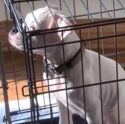chien et animalerie