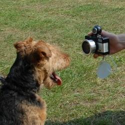 chien appareil photo
