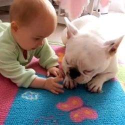 chien bébé video