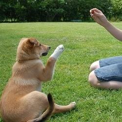 L'apprentissage du chien