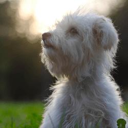 chien dans l'herbe