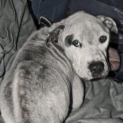 chien maltraité noir et blanc