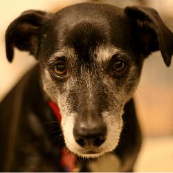 Stress, anxiété : comment aider mon chien à se relaxer ?