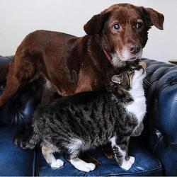 un chat devient le guide d'un chien aveugle