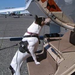 Des conseils pour prendre l'avion avec son chien