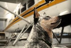 chien avion voyage