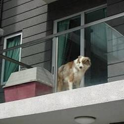 un chien enfermé sur un balcon