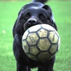 chien mord ballon foot