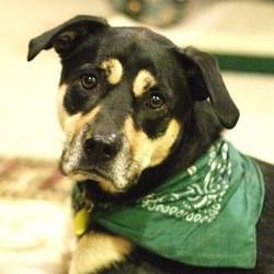 chien triste bandeau vert