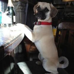 chien bar