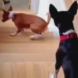 un chien monte les escaliers