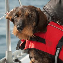chien bateau