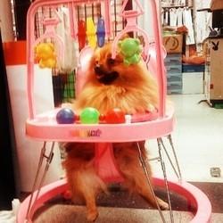 chien bébé avion hôtesse de l'air