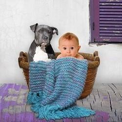 chien enfant bébé cohabitation