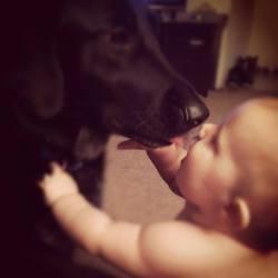 un chien sauvé un bébé
