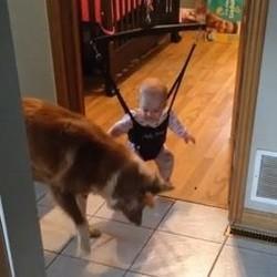 Un chien apprend à un bébé comment sauter