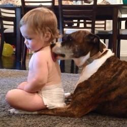 un chien lave un bébé