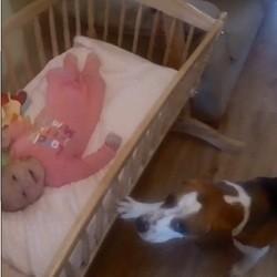 un chien berce un bébé