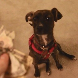 un chien mange des billets